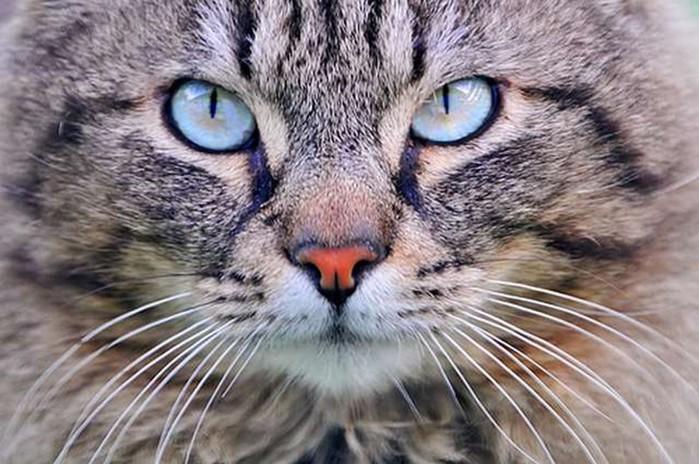 Секреты домашних любимцев: 20 любопытных фактов о кошках