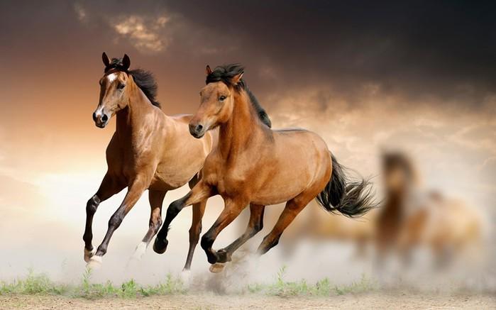 Умные, прекрасные и благородные животные: 30 фактов о лошадях