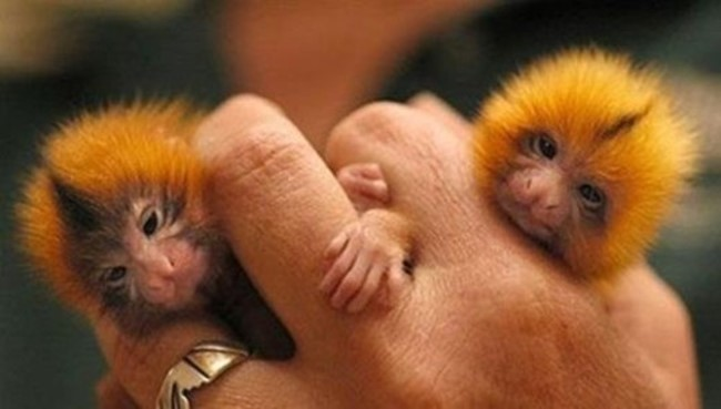 Малыши разных животных на фотографиях