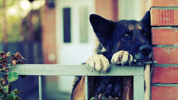 Влияние собаки на здоровье человека