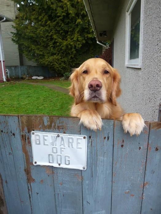Осторожно! В этом посте жутко добрые собаки