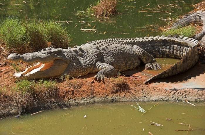 Самые большие животные: рекорды дикой природы