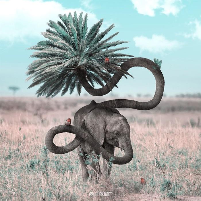 Жюльен Табет: фотоманипуляции, животные и ассоциации
