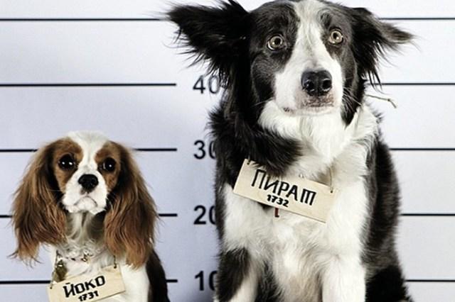 Дрессировка собак и коррекция поведения животных