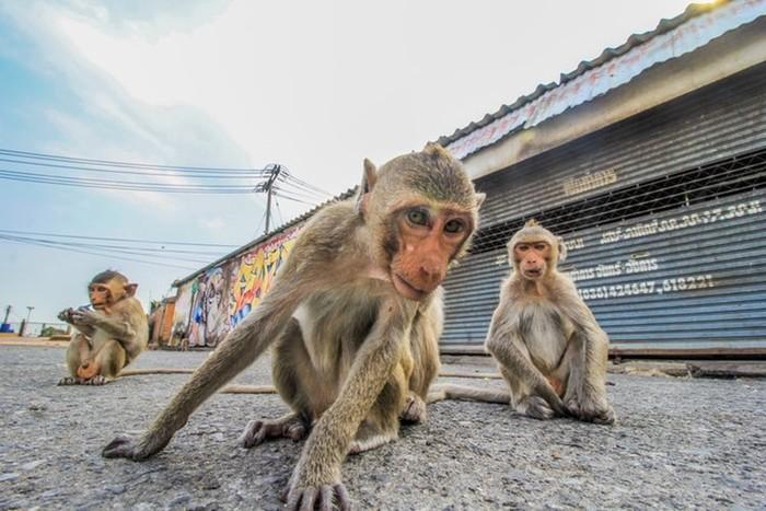 Эмоции обезьян в фотографиях