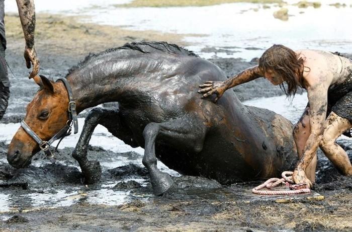 Как люди спасают животных: любить  это значит действовать! Фотографии