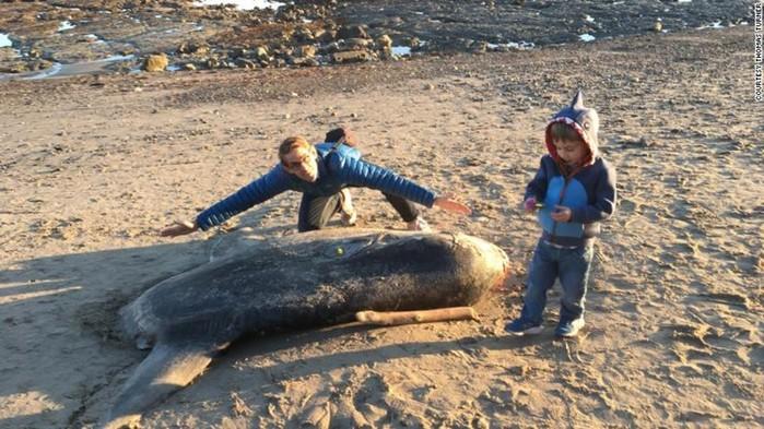 Огромную австралийскую рыбу нашли на пляже в Калифорнии