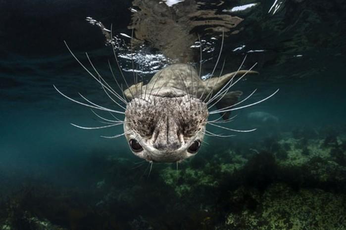 Лучшие подводные фотографии конкурса Underwater Photographer