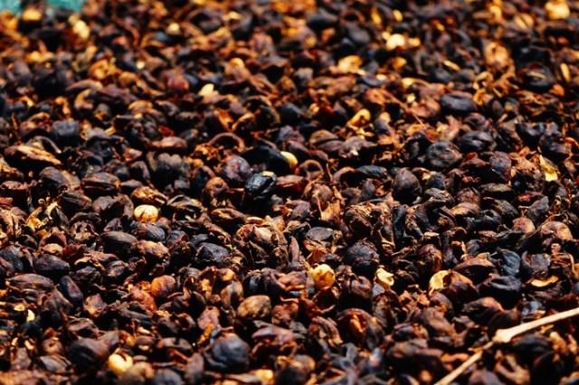 Как выращивают кофе в Гватемале