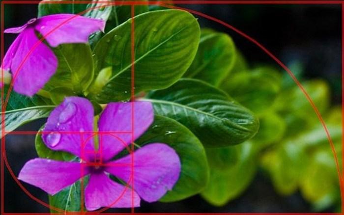 Как называются основные эффекты на фотографиях