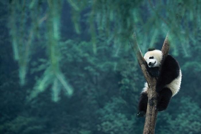 25 невероятных фактов о животных