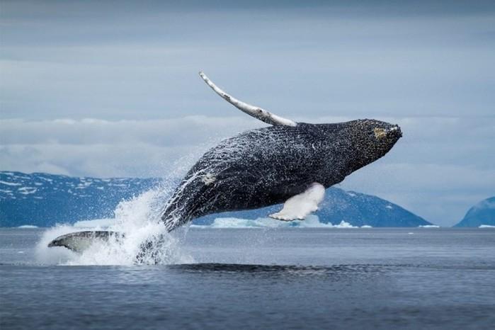 Интересные факты о животных, которые потрясают