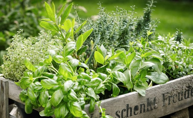 You Ve Been Storing Fresh Herbs Wrong Your Whole Life