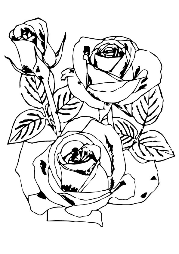 Parentune Free Printable Rose Coloring Pages Rose Coloring Pictures For Preschoolers Kids