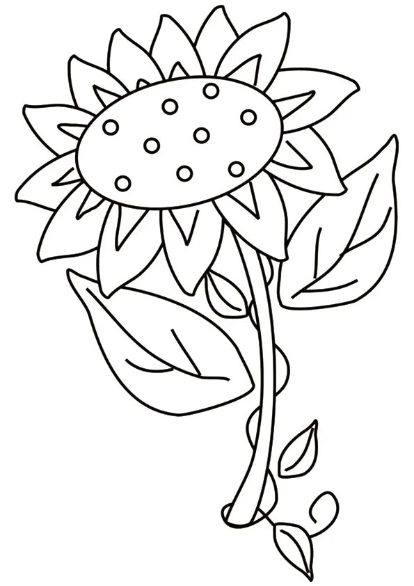 Free Printable Sunflower Coloring Pages, Sunflower