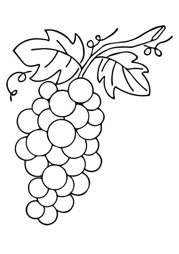 Parentune Free Printable Leafy Grapes Coloring Picture Assignment Sheets Pictures For Child