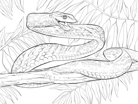 Parentune Free Printable Green Vine Snake Coloring Picture Assignment Sheets Pictures For Child