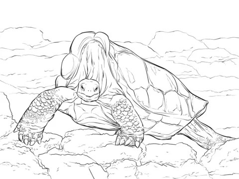 Free & Printable Island Giant Tortoise Coloring Picture