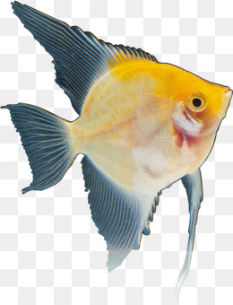Ikan Nila Png : Nila,, Ikan,, Sirip, Gambar