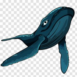 Shark Vector Graphics Blue Whale Euclidean Whales Serenity Cartoon Animated Transparent PNG