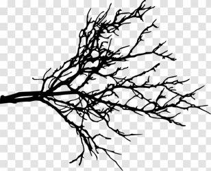 Branch Clip Art Tree Twig Plant Stem Outline Transparent Transparent PNG