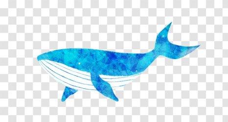 Blue Whale Cartoon Color Transparent PNG