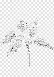 Sketch Twig Leaf Plant Stem Line Art Plants Handmade Watercolour Paper Transparent PNG