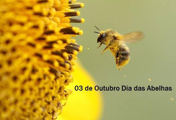 Resultado de imagem para dia das abelhas