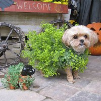 Dog Halloween Costume: Chia Pet