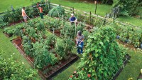 Plant vegetable in your back yard - Southern Living