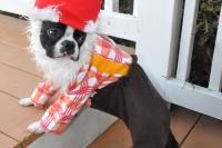 Lawn Gnome - Pet Halloween Costumes - Southern Living