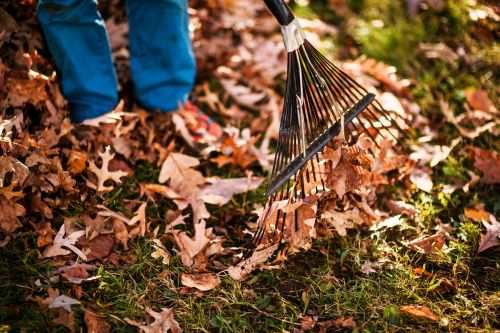small resolution of does raking leaves make you a bad person