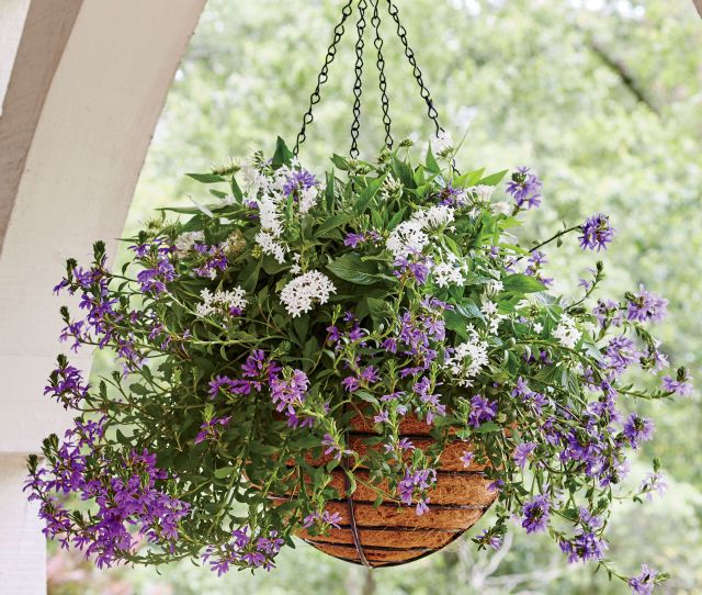 The Most Low Maintenance Container To Spruce Up Your Summer