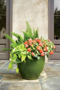 Heat-Tolerant Container Gardens for Sweltering Summers ...