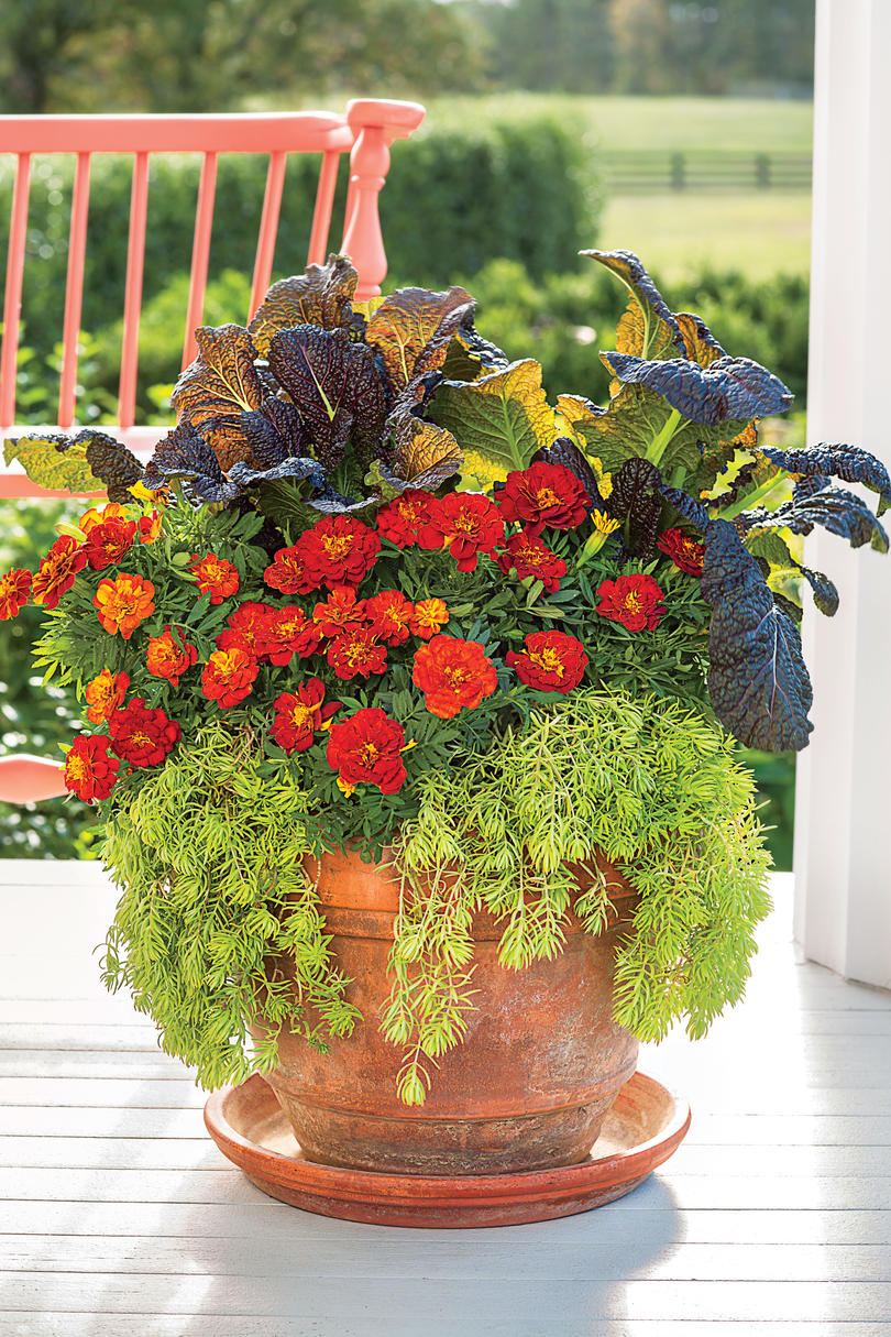 gorgeous fall flowers