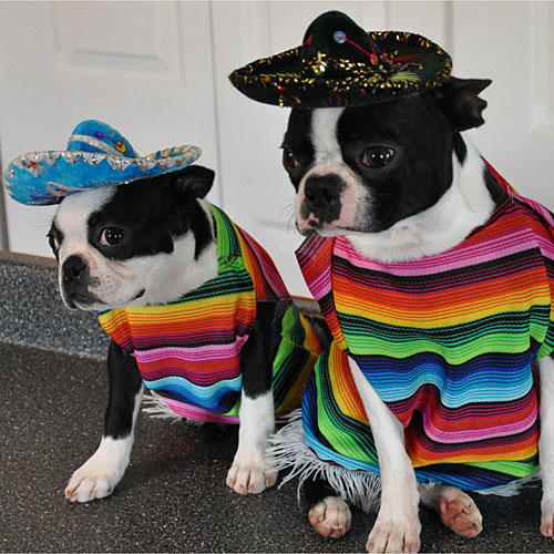 Pet Halloween Costume Contest Southern Living