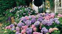 The Complete Guide to Hydrangeas - Southern Living