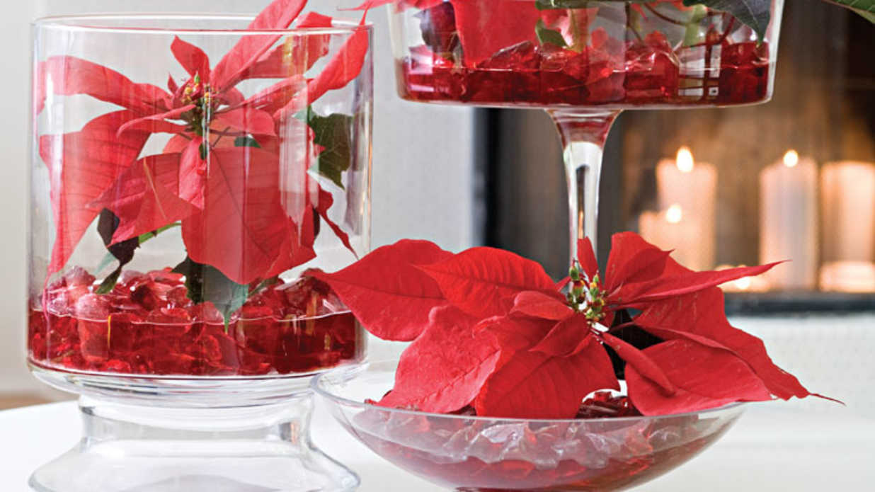 pedestal kitchen table glacier bay faucet show off your poinsettias - southern living