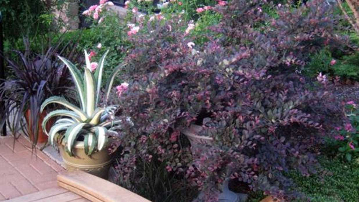 The Best WhataPetalums  You Know Them Purple Bushes  Southern Living