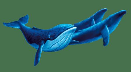 whales fantasia humpback disney 2000 wiki background wikia resolution protagonist short pixels park
