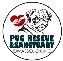 pug rescue pug adoption
