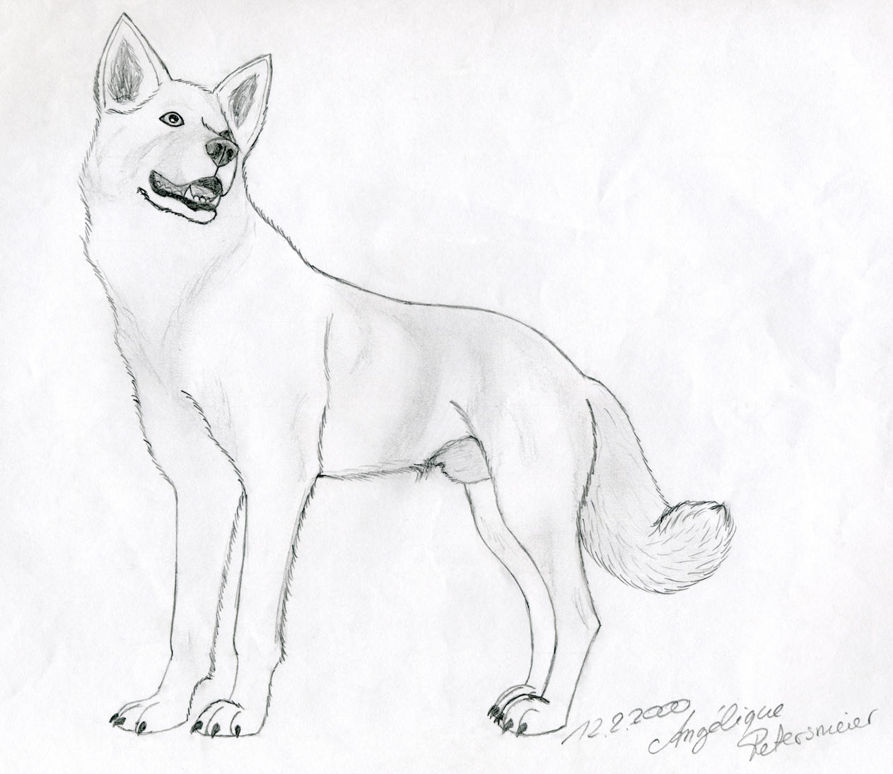 Alaskan Husky by bijaihd on DeviantArt