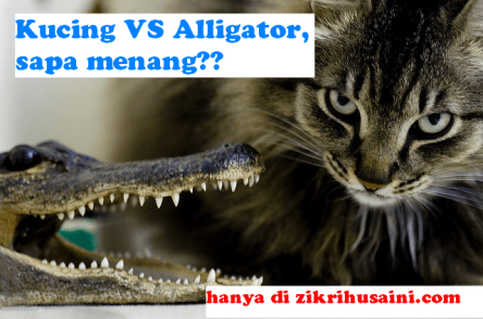 kucing cute, alligator, cat vs alliogator, cat versus crocodile, kucing lawan buaya, kucing lawan alligator, kucing cantik ,kucing garang,