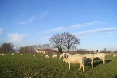 incontri pecore SMS fasi iniziali datazione