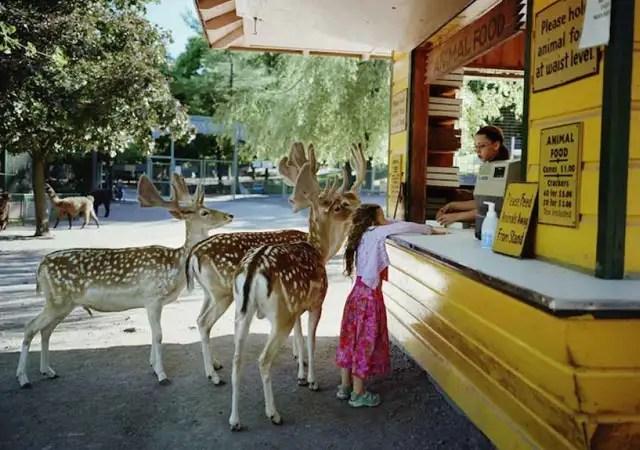 robinschwartzciervos - La fotógrafa Robin Schwartz muestra la conexión de su hija con animales de todo tipo