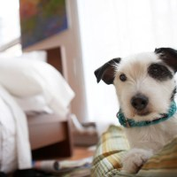 Provide Your Dog a Bed | Outfit Your Bedroom for a Better ...