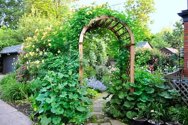 Best Grow Hollyhocks Way