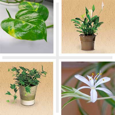 composite of four air cleaning house plants