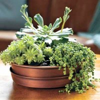2. Plant a Table Centerpiece | 75 Outdoor Upgrades for ...