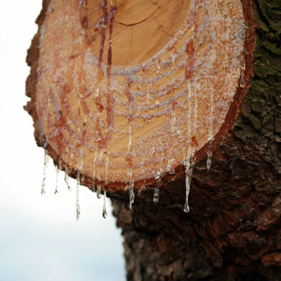 1 Remove Tree Sap  10 Uses for Mayonnaise  This Old House